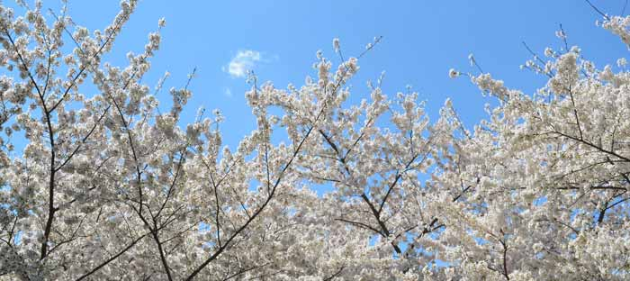 Spring is a wonderful time to enjoy shopping, dining, and the wonderful sights in Langhorne, Bucks County PA